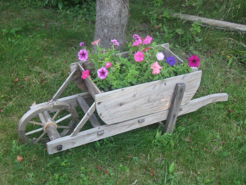 Wooden wheelbarrow flower box