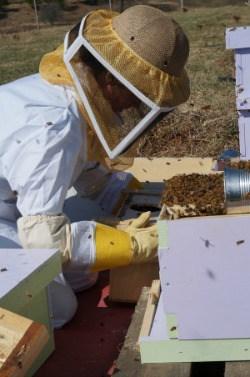 Become a beekeeper online class