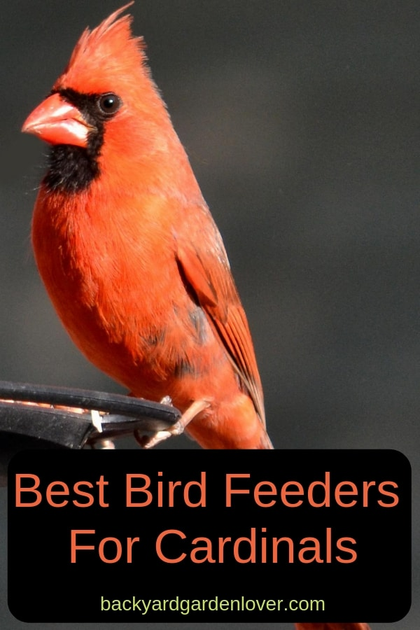 A cardinal bird sitting on a bird feeder