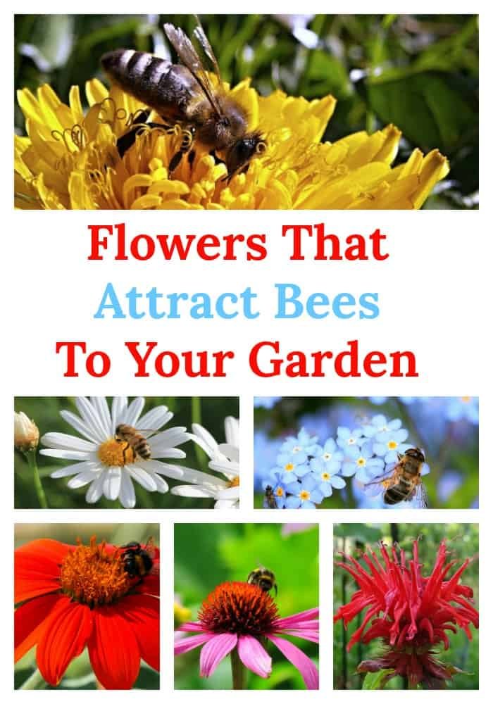 Invite honeybees into your life with these flowers that attract bees to your garden