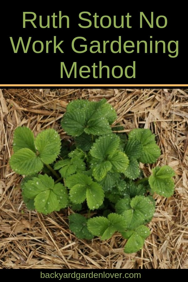 Tired of the usual back breaking gardening methods? Give Ruth's no work gardening method a try. It works amazingly well and you'll love the results! #ruthstout #noworkgardening #gardening #gardeningtips #organicgarden #gardener #bestgarden #bgl