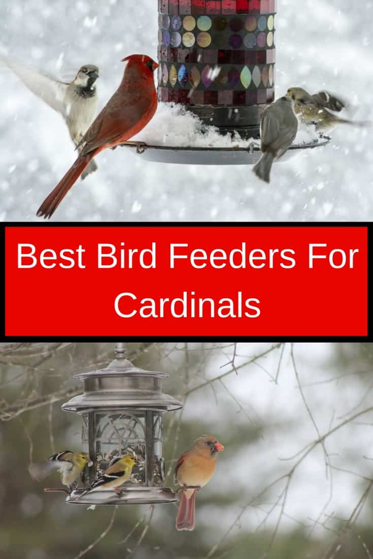 Best Bird Feeders For Cardinals