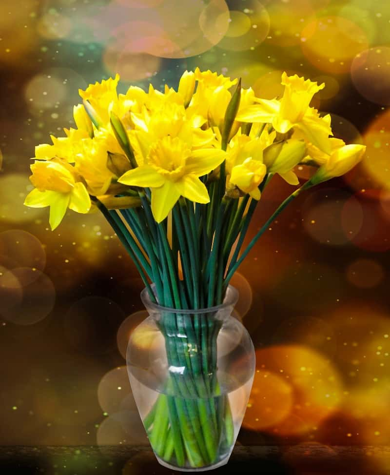 A vase filled with daffodils