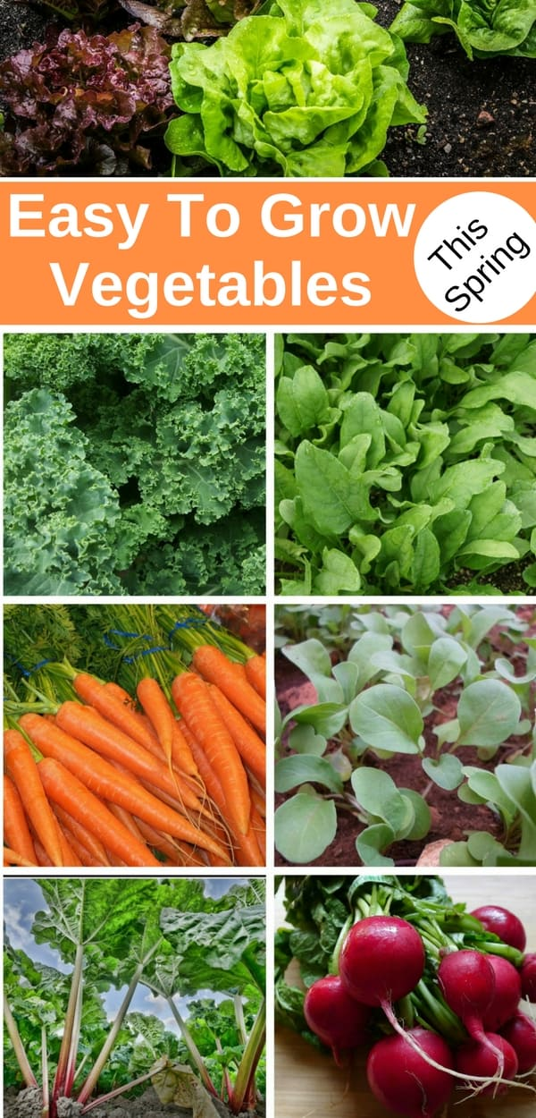 Spring is here, and gardeners everywhere are looking to start those first spring crops. Here are some of my favorite spring vegetables that are also easy to grow. Learn how to plant, how to care for, fertilize and water these early spring vegetables and enjoy the veggies of your labor ;)