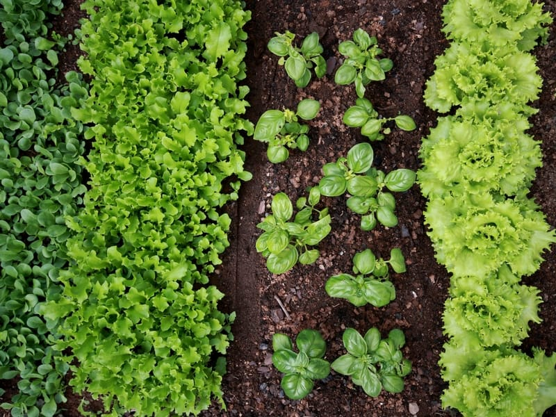 Easy vegetables to grow this spring