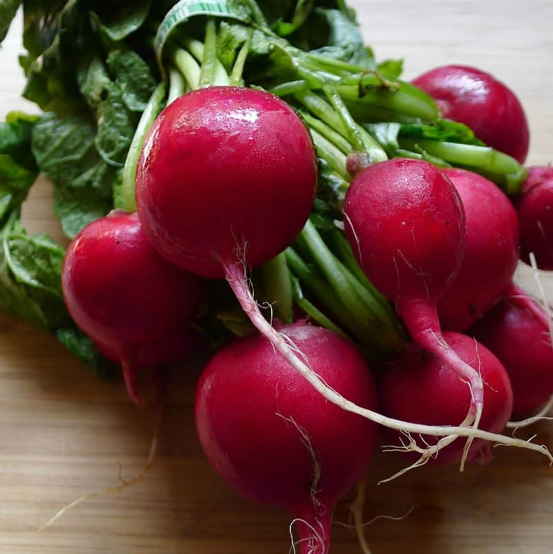 Fresh form the garden bunch of radishes