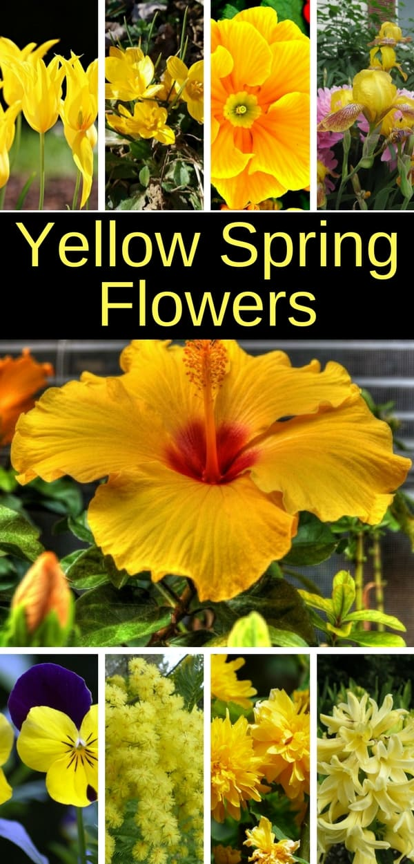 These yellow spring flowers will energize your garden. #spring #springflowers #gardening #home