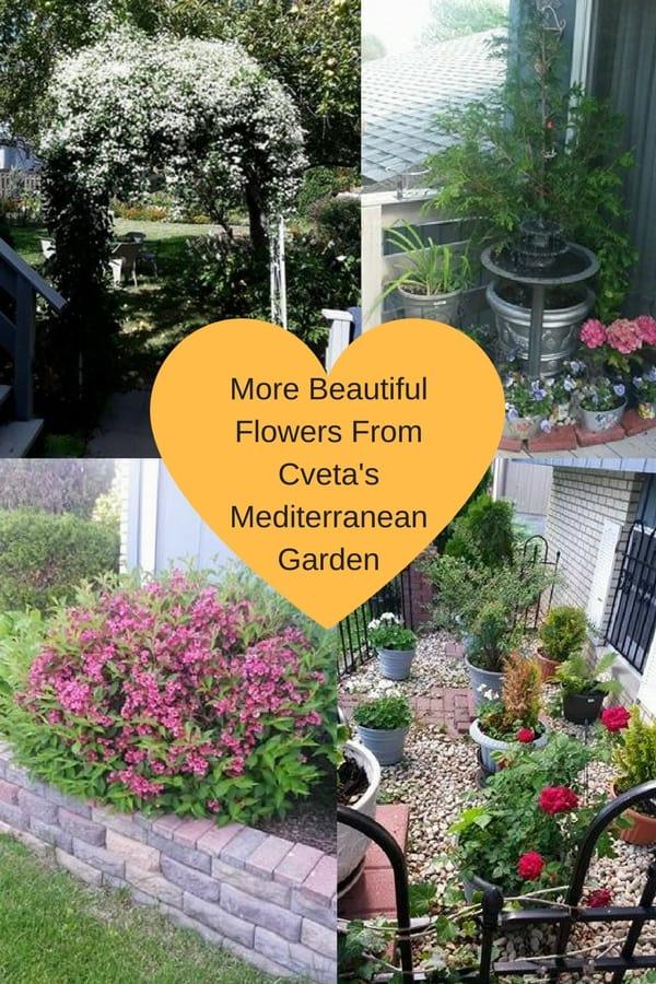 Mediterranean garden flowers