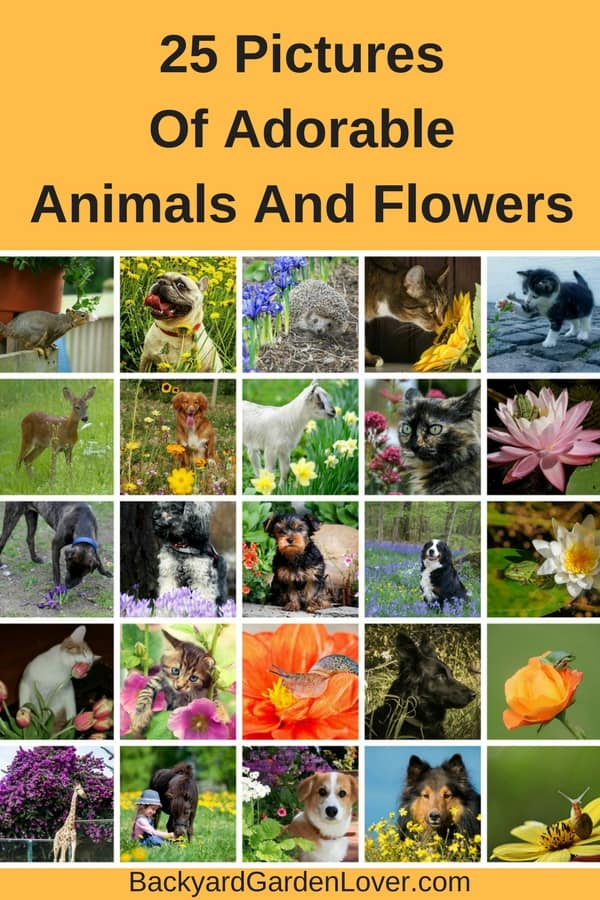 It's spring and nature is coming alive. Here's a picture collection of adorable animals and flowers: dogs, cats, giraffes, frogs, horses and hedgehogs roaming flower fields and gardens.