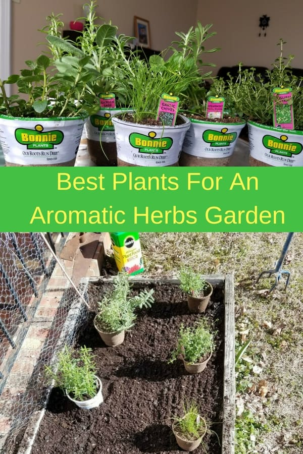 Everyone needs a small aromatic herbs garden. Enjoy the fresh aromas of lavender, sage, rosemary, spearmint, chocolate mint, English thyme, lemon thyme and many other deliciously smelling herbs. Here are some ideas for how to grow herbs in your garden, a raised bed or a pot on your back porch.