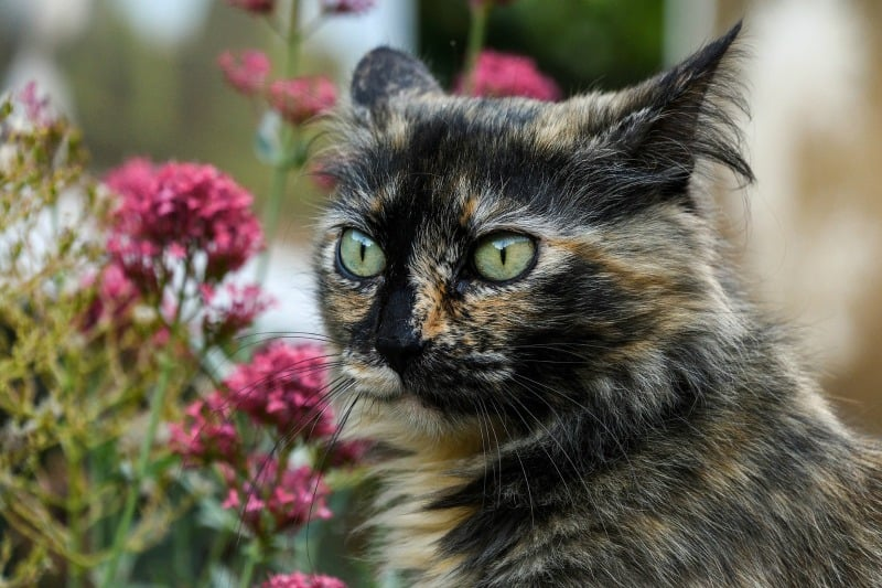 Big eyed cat looking at flowers