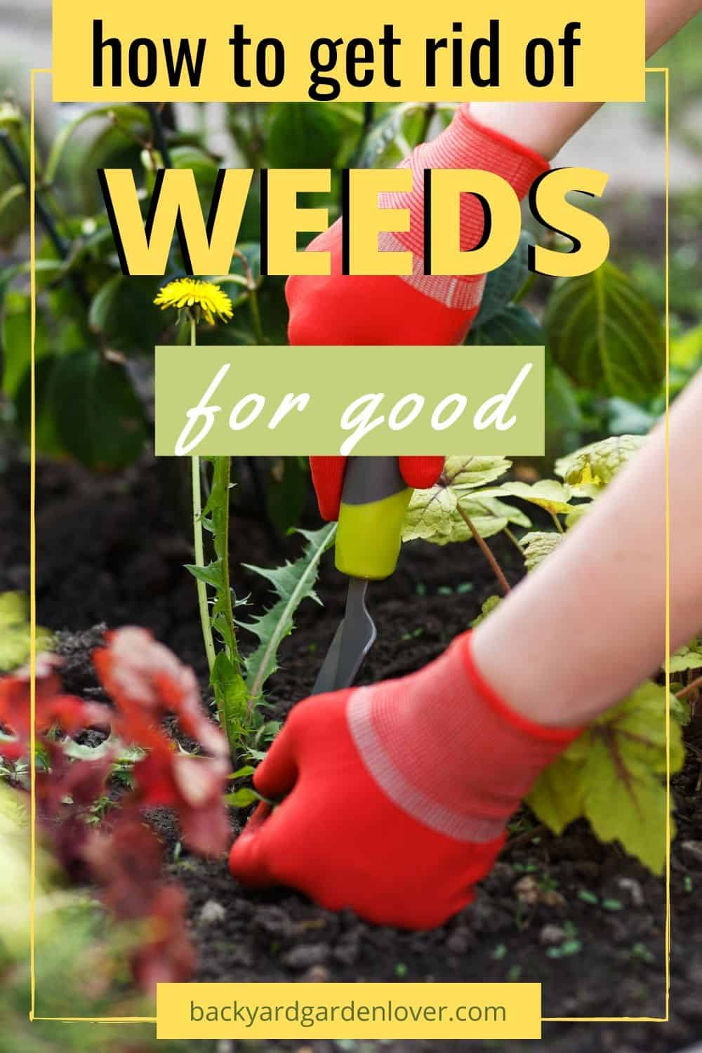 Woman wearing red garden gloves pulling weeds