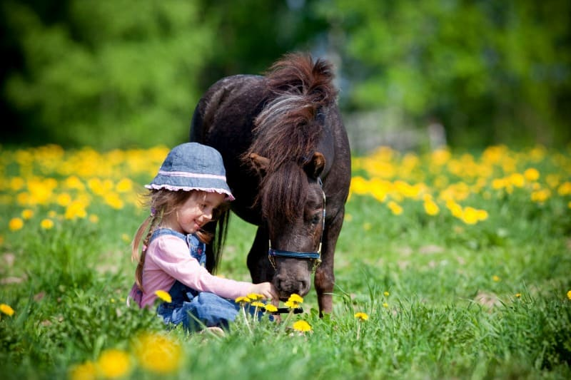 Little girl and a horse smelling dandelions