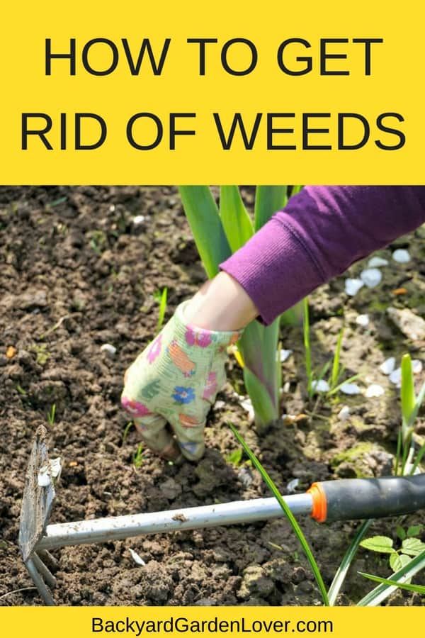 Wonder how to get rid of weeds for good? These tips will help you identify and remove weeds from your vegetable garden, flower beds and even from your lawn, without the use of harmful chemicals. See how you can have a weed free garden naturally. #weeds #getridofweeds #organicgardening #gardeningtips #bgl