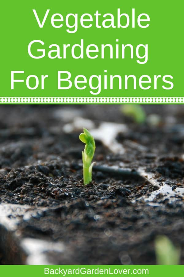Think vegetable gardening for beginners is hard? Here are simple tips to help you grow veggies in your backyard, regardless how much space you have. Use small spaces to grow fruits, herbs and vegetables in pots and other containers, create raised beds, or grow a lot fi you have a large plot. Everything you need to know in one place! #beginnergardening #gardening #organic #garden