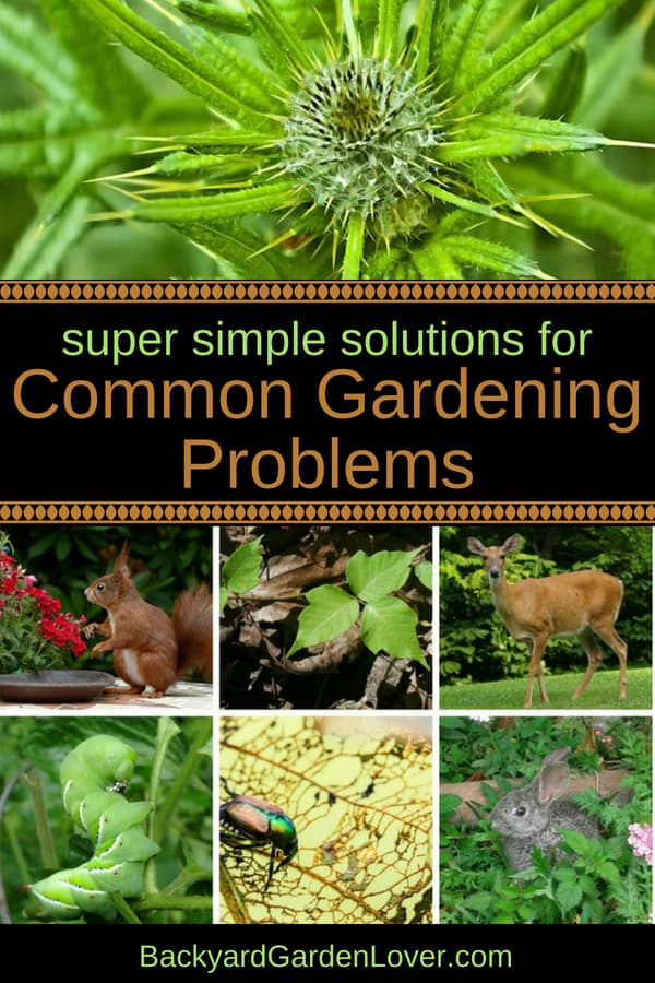Are you looking for solutions to these common gardening problems? Weeds, dear, rabbits, squirrels, Japanese beetles, hornworms, poison ivy, oak and sumac, and many other garden problems can be solved with these simple, natural tips. #gardening #gardenpests #organicgardening #gardenproblems #homesteading #selfsufficiency