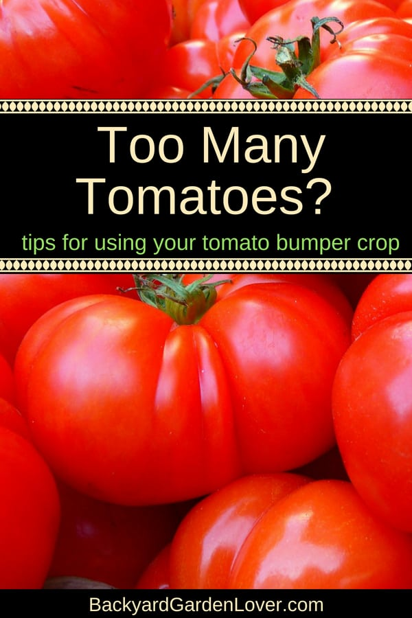 Having a bumper crop of tomatoes and wonder to do when you have too many tomatoes? Here are lots of recipes and ideas for using your garden tomatoes: salads, sauces, soups, jelly and more. #tomatoes #bumpercrop #organic #gardenfresh #vegetablegarden #harvest #homesteading