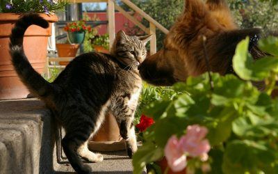 Cat and dog in the flower garden