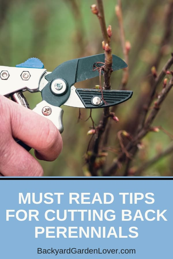 As fall approaches, you might be wondering if cutting back perennials is necessary. And the answer is that it depends on the plant. Here's a quick guide to pruning perennials to keep them in top shape. #perennials #pruning #fall #fallgardening #springgardening #gardeningtips ##garden