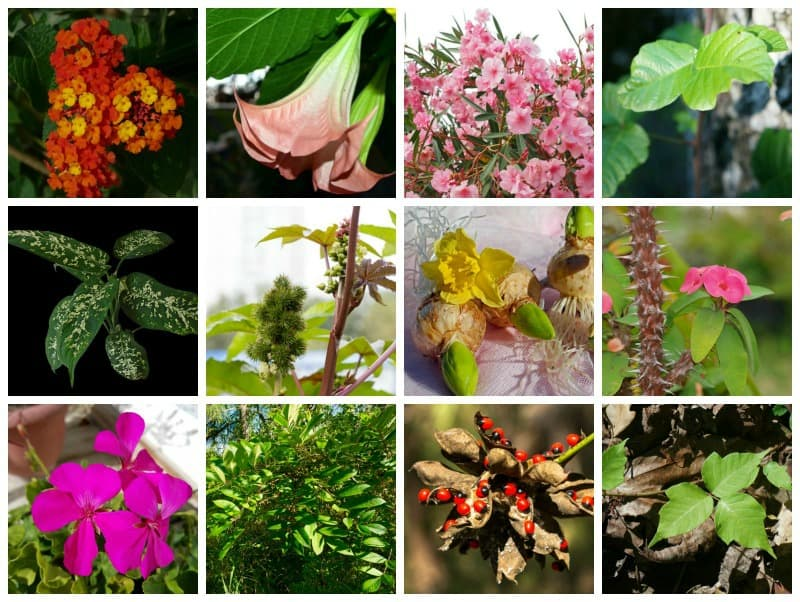 Plants that are harmful to humans