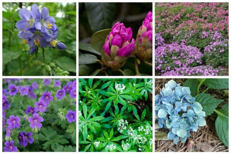 9 Gorgeous Plants That Grow Well Under Pine Trees