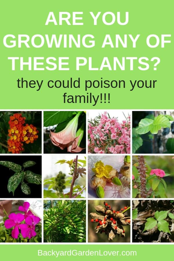 Are you inadvertently putting your family in danger? Many of the plants in your garden could be harmful to humans. Learn which plants you should not plant if you have children and pets. It's better to avoid certain plants and keep your family safe. #gardening #landscaping #deadlyplants #lantana #daffodilbulbs #oleander #geraniums #bgl