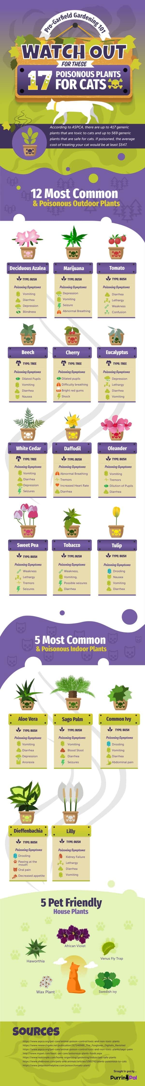 Toxic pet plants infographic #pets #ilovemypets #petpoison #keeppetssafe #bgl