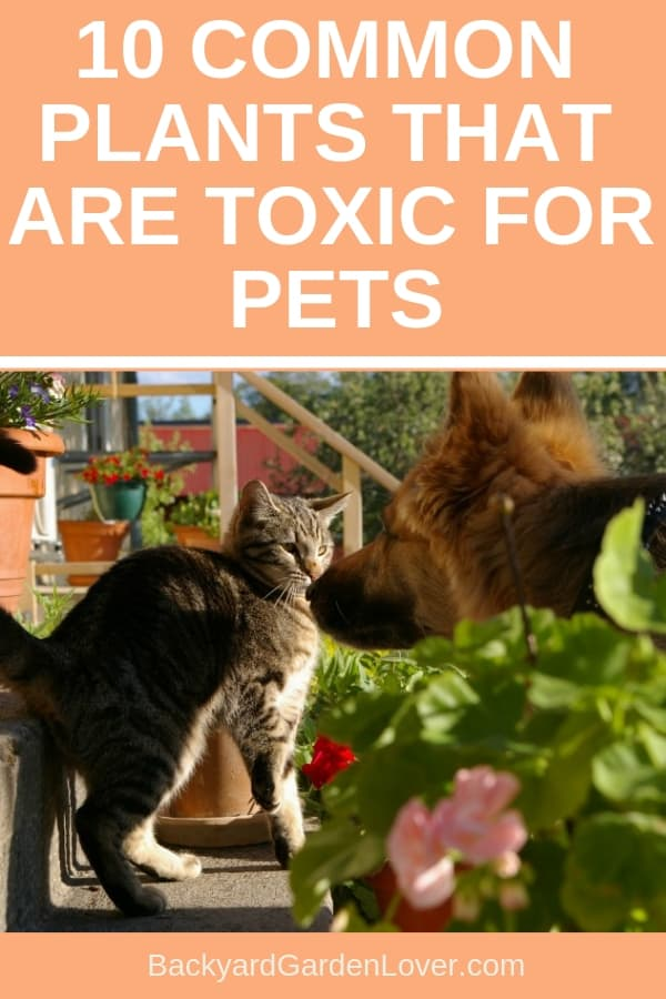 There are many plats we love to have in our homes or gardens that can be harmful to our pets. Here's a list of 10 toxic plants for pets so you can avoid bringing them into your home. #pets #petsafety #gardeningwithpets #toxicplants #gardeningtips #infographic