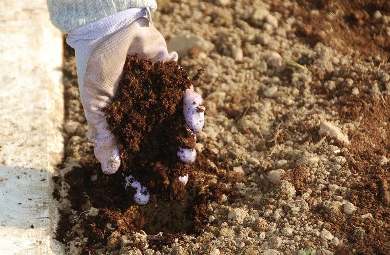 A handful of organic compost