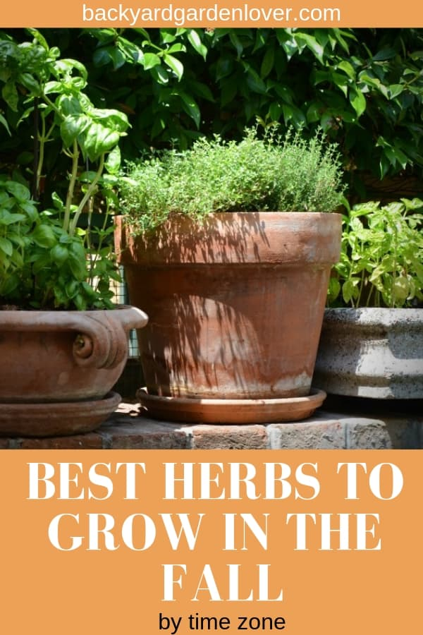 Herbs growing in ceramic planters