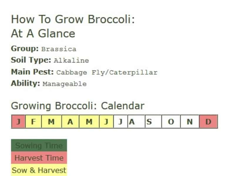 How to grow broccoli at a glance