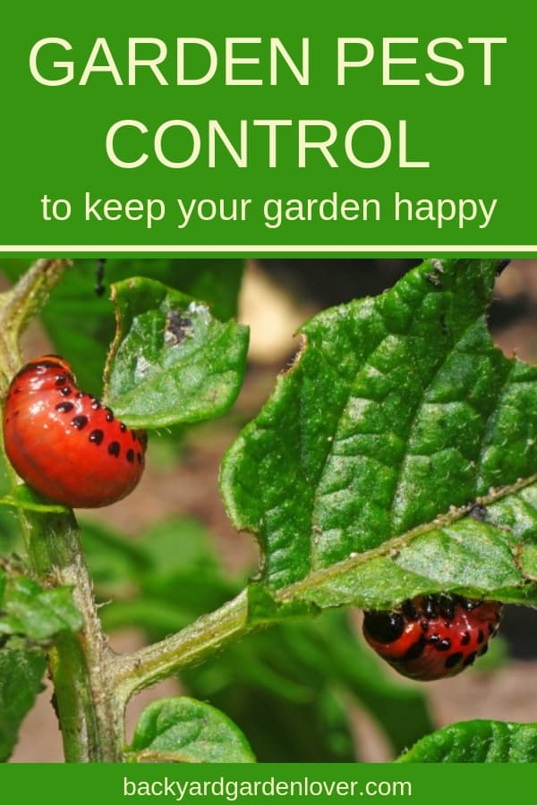 Is your vegetable garden overtaken with nasty pests and diseases? Take a look at these natural tips for home garden pest control. No matter if you're struggling with animals, pests, or disease, you'll learn how to get rid of them naturally: lots of ideas! #gardenpests #gardeninsects #gardeningtips #organicgardening #homesteading #bgl #gardening