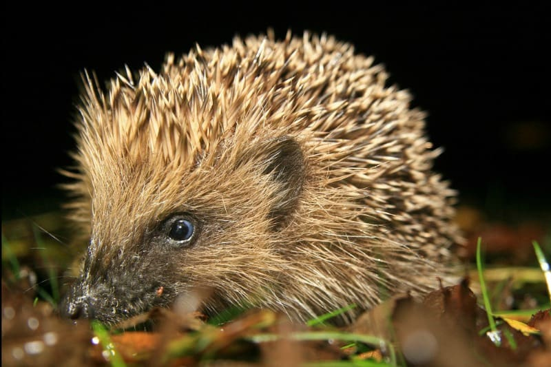 Hedgehogs love insects and slugs!!!
