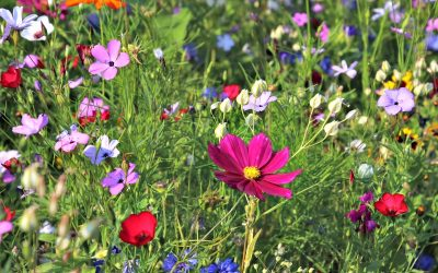 Beautiful, multi-colored wildflowers