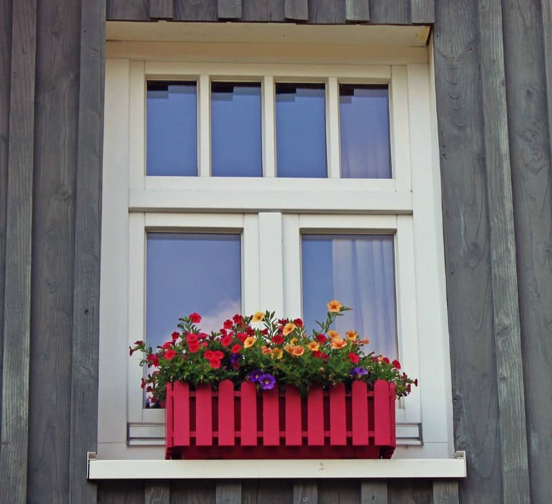 Colorful flowers by the window