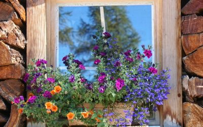 Decorative flowers in a window box planter