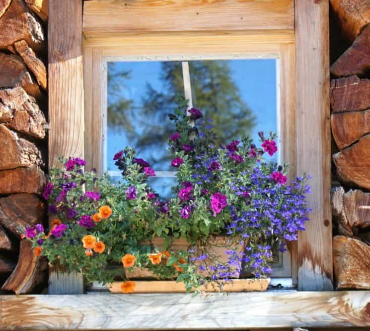 7 Window Box Planters That Make Your Plants Pop