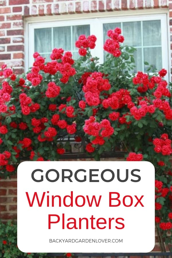 Gorgeous window box planters
