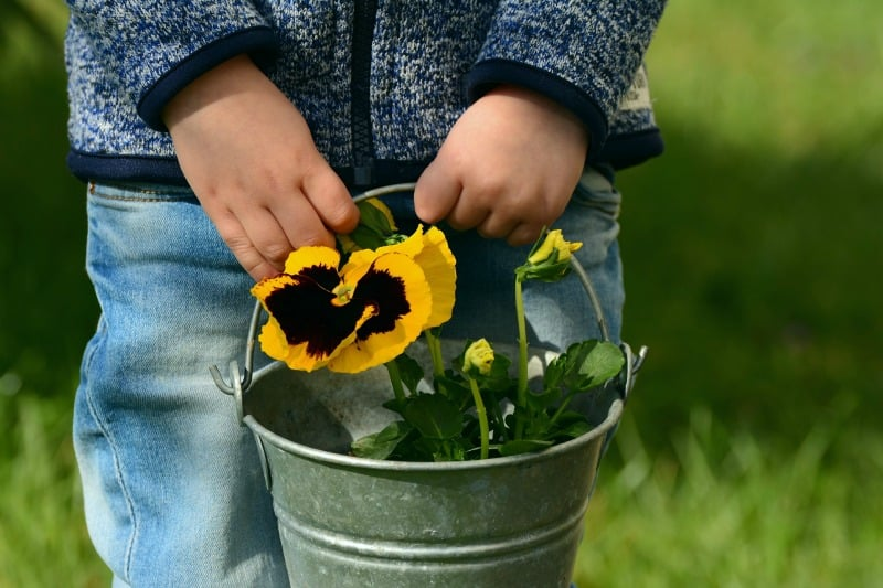 Child carrying a silver bucket with pansies