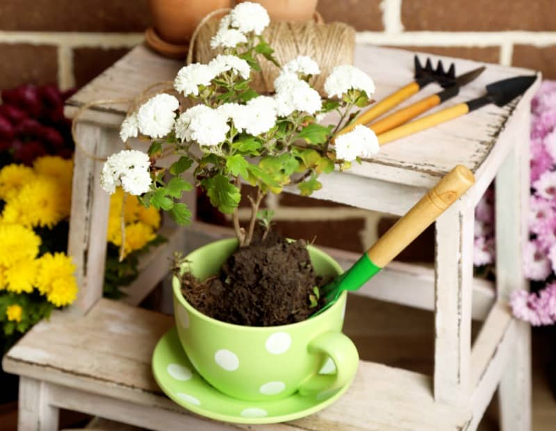 Flowers in pot on stepladder, potting soil, watering can and plants.