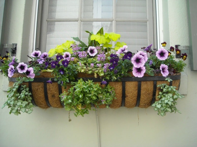 Colorful flowers in window box