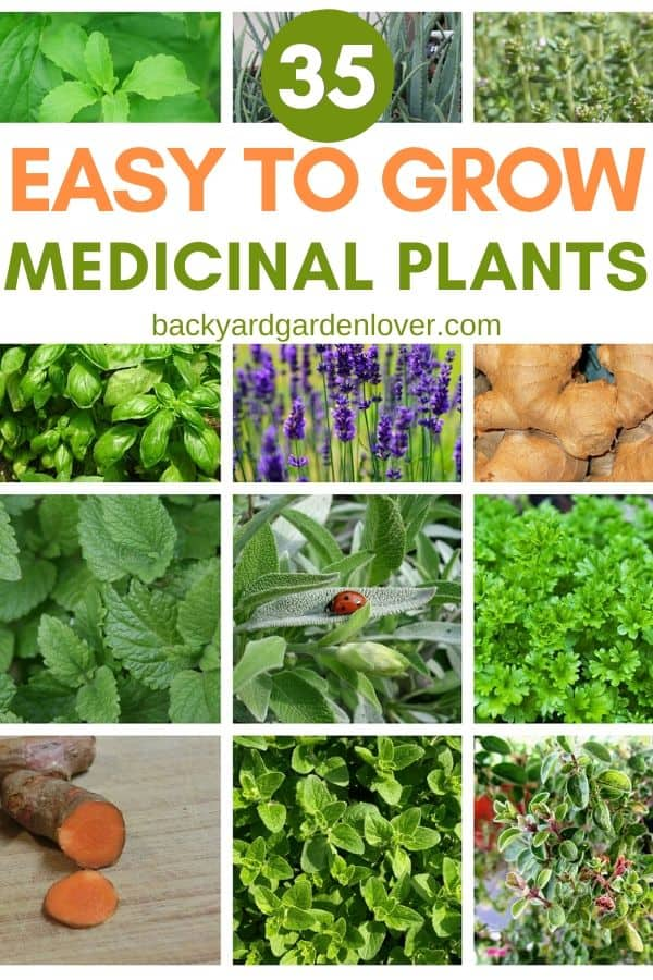 Collage of easy to grow medicinal plants pictures