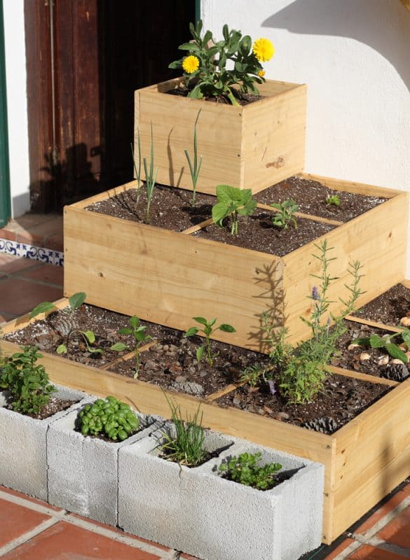 Herb garden platend in square wooden and cement boxes