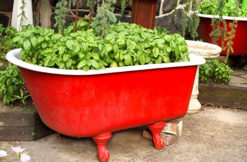 Clawfoot bath herb garden