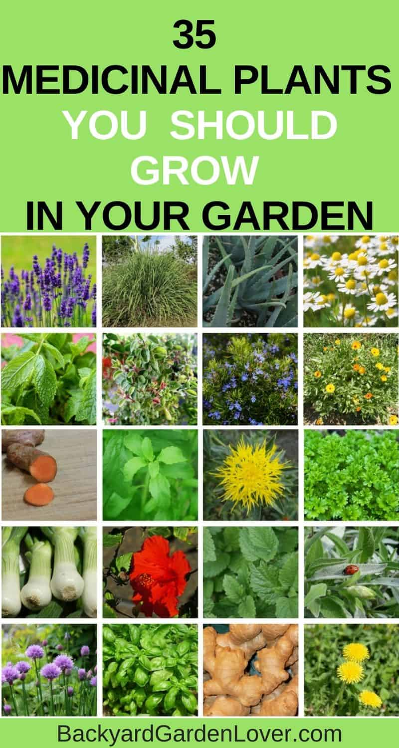 35 Medicinal plants you should grow in your garden