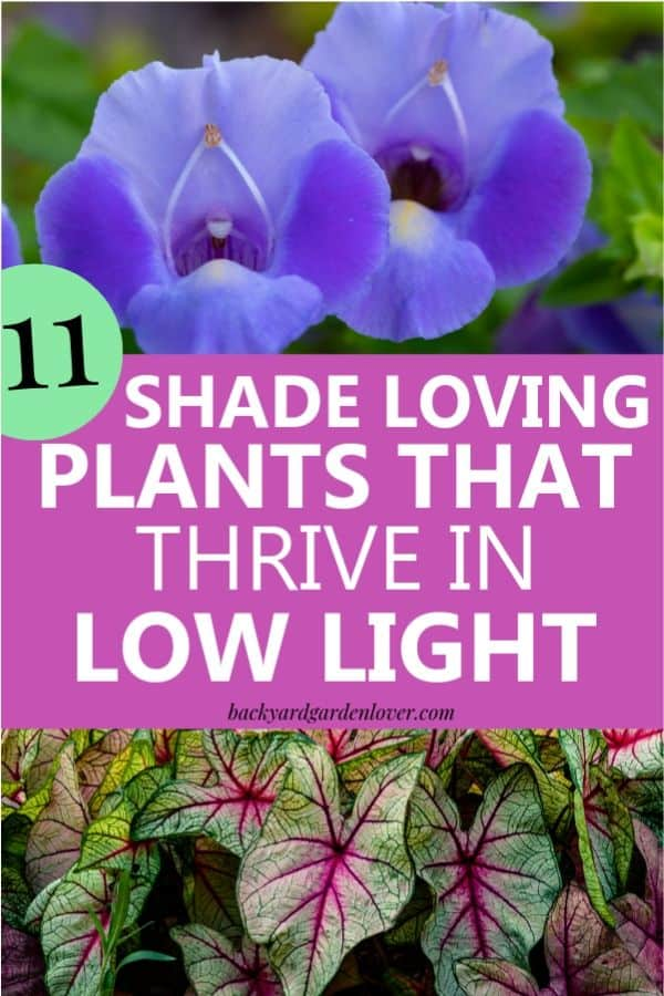 Shady areas in your garden deserve a burst of color too, just like the rest of your garden. Here are the best shade loving plants to try: hostas, periwinkle, inpatients, ferns and more. #shadegarden #shadelovingplants #landscaping #landscape #garden #flowergarden