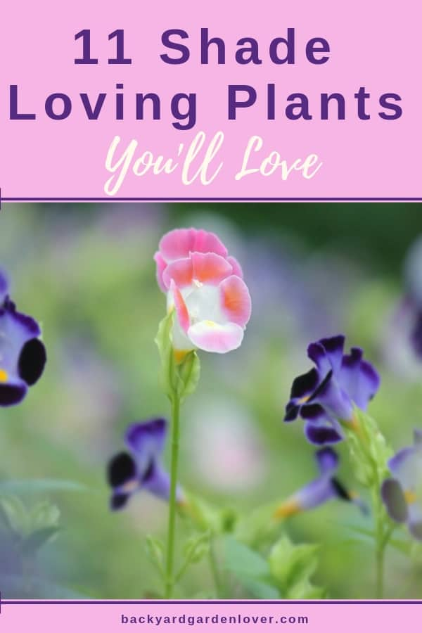 Here are 11 of my favorite shade loving plants you'll love growing in your garden, on your porch, in containers and hanging baskets! Foxgloves, ferns, impatients, hostas, periwinkle, wishbone and more! #shadeplants #plantsthatloveshade #shadelovingplants #whattoplantinshade #shadygardenplants #shadegarden #gardening