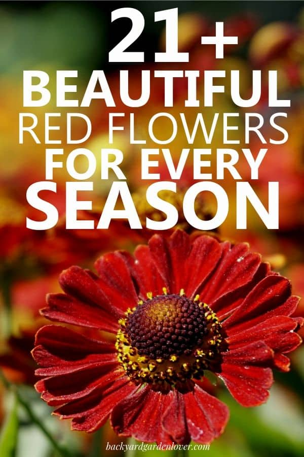 Enjoy beautiful red flowers year round by planting some for every season. Red flowers will brighten up any flower bed, and they mix well with blue, white and yellow blooming plants. #redflowers #landscaping #flowers #prettyflowers #flowergarden #red