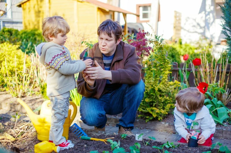 Boys gardening with their daddy