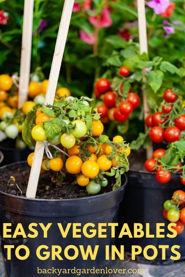 If you have a small garden space, (or maybe NO garden space), you'll LOVE these easy vegetables to grow in pots! You can place these containers by your front door, on your porch, on the balcony, or wherever you find a sunny spot around the house. #gardening #containergardening #organic #growyourown #vegetables #homegrown #smallapacegarden #pottedveggies #pottedplants